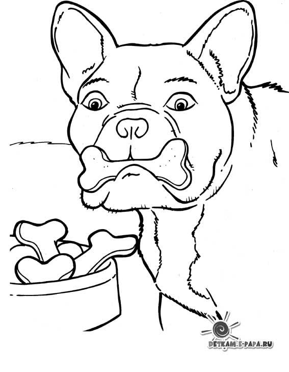 Kleurplaat Gevaarlijke Dieren Fargelegging Av Tegninger Hund